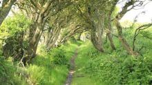 My idea of happiness? A strimmer and a bramble-choked path
