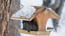So hilfst du Eichhörnchen und Vögeln im Winter