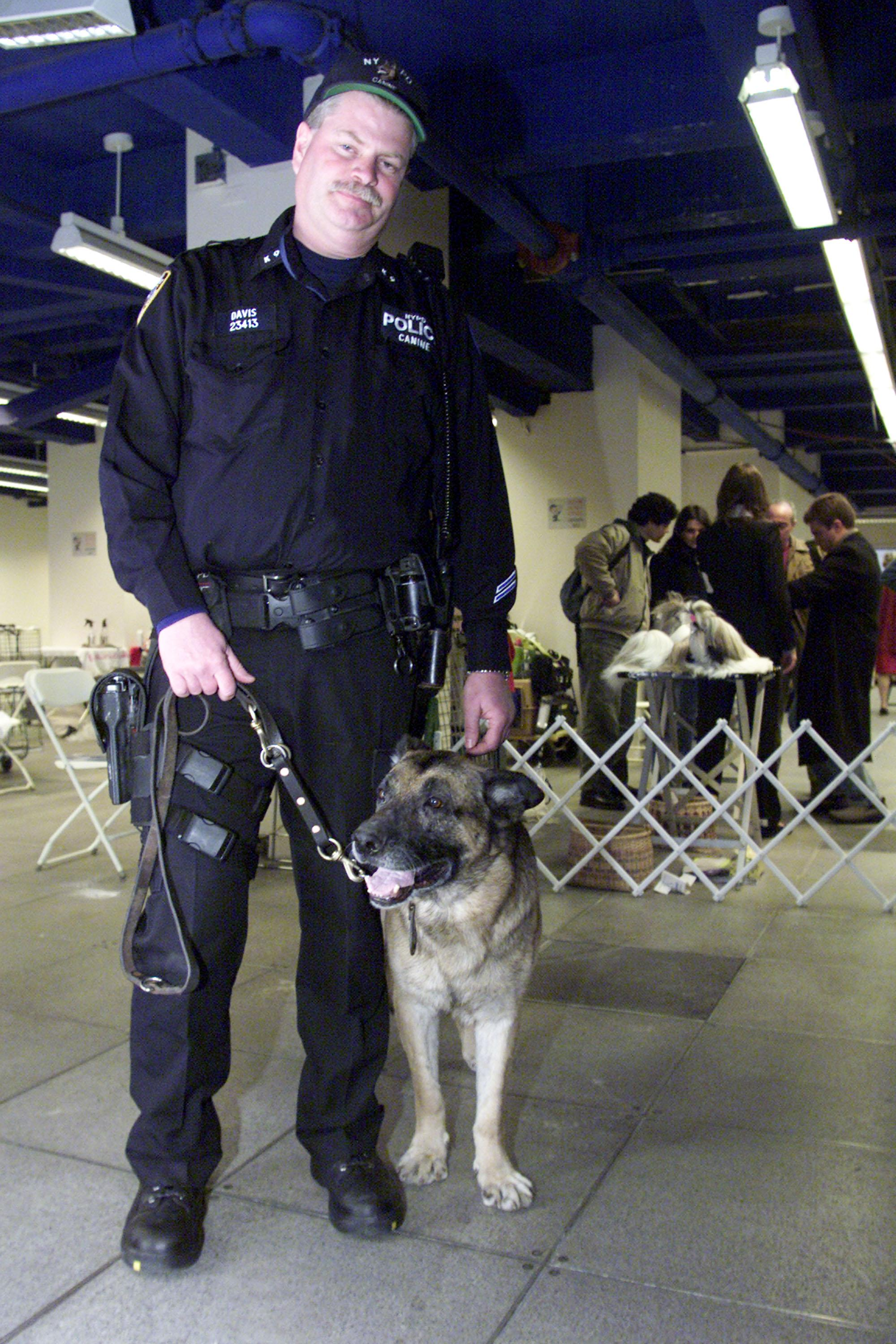 New York Police K-9 officer Peter Davis and his Search and Rescue dog, Apollo, attend the New York Specialty Dog Show February 9, 2002 in New York City. Officer Davis and Apollo were the first Search and Rescue dog crew on site after the collapse of the World Trade Center September 11, 2001 in New York. Officer Davis and Apollo received the Langden Sarter award from the American Kenel Club (AKC). A check for $400,000 was given from the AKC to the Federal Emergency Management Agency (FEMA) for studies on the health affects of exposure to the site on dogs like Apollo. (Photo by George Best/Getty Images)