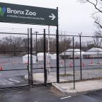 The Bronx Zoo Is Also Empty, but the Animals Don't Mind