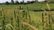 Charlotte's Web Announces Research Initiative with Rodale Institute and Natural Care to Pioneer Regenerative Hemp Agriculture In North America