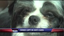 Owner Mad After Officials Rescue Dogs From Hot Car