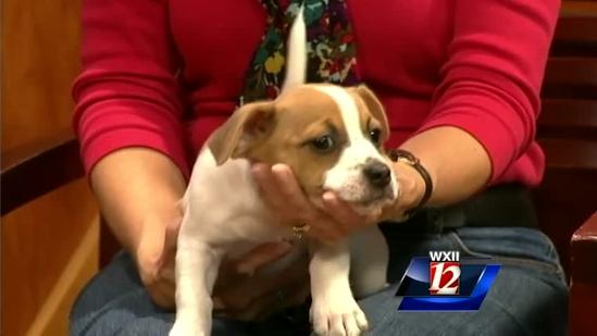 Noon Pet Of The Week: Lucy