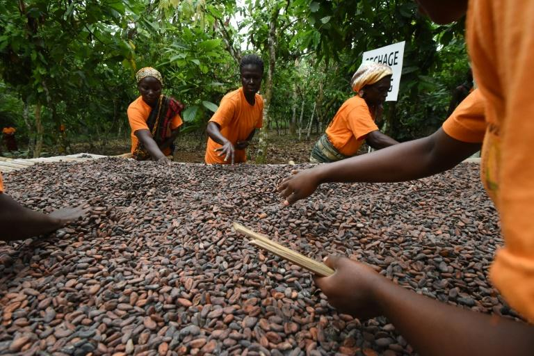 West Africa hard pressed to expand cocoa market share