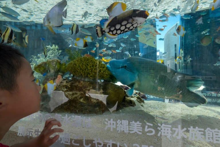 Tokyo aquarium seeks video-chats for eels