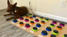 """Logopädin bringt ihrem Hund das """"Sprechen"""" bei"""