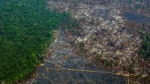 French lenders bankroll firms linked to deforestation: analysis