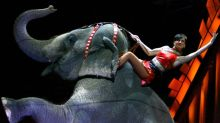 Circuses banned from using elephants in New York