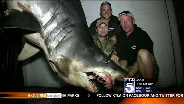 World-Record Shark? Fishermen Talk About Their Huge Catch
