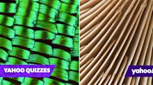 Quiz! Can you name these 15 objects shot close-up?