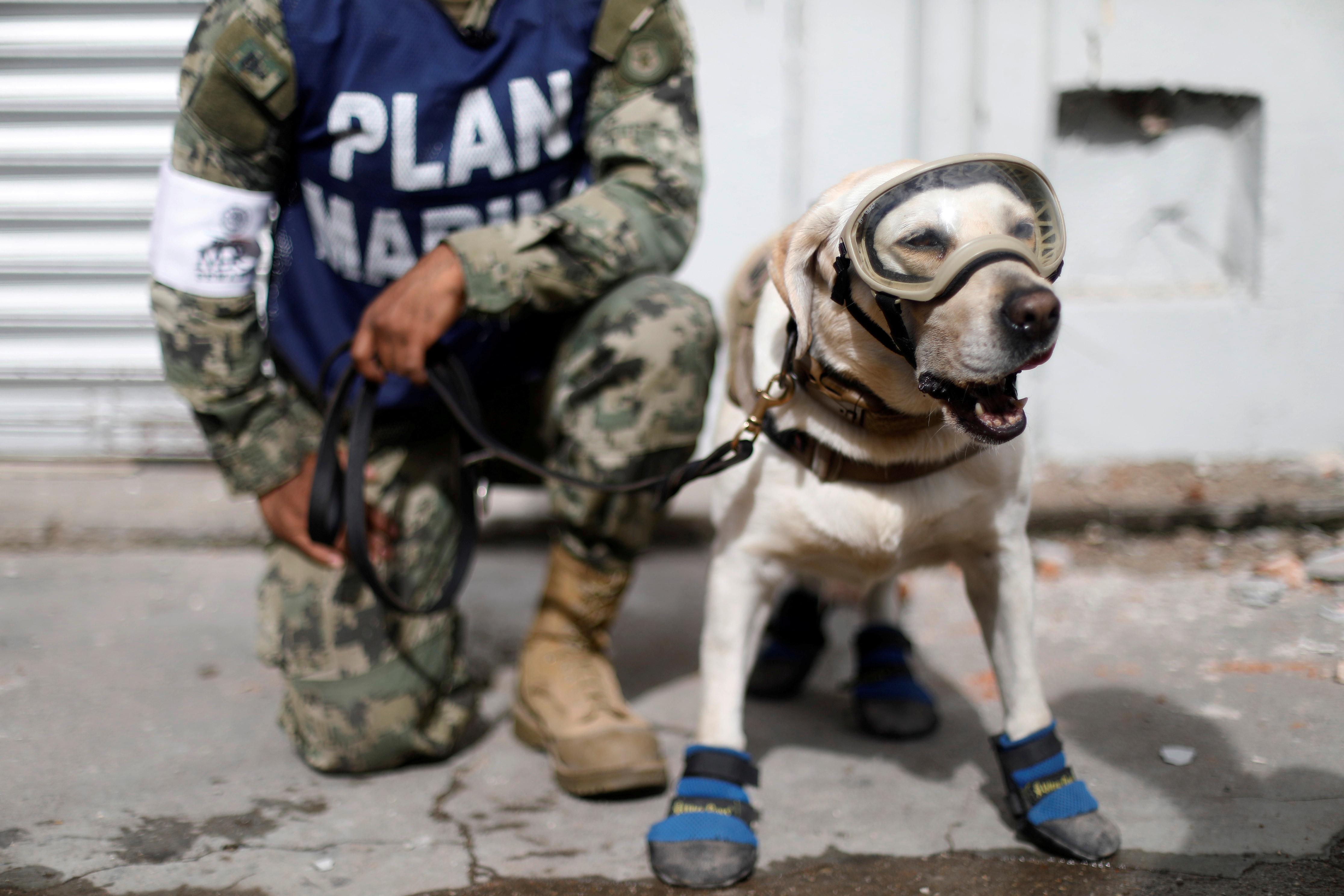 <p>A member of the Mexican Navy stands next to a rescue dog after an earthquake struck on the southern coast of Mexico. (Photo: Edgard Garrido/Reuters) </p>