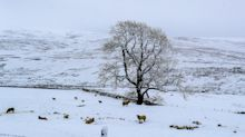 No white Christmas for UK, but frost set to bring 'seasonal feel' to festive period