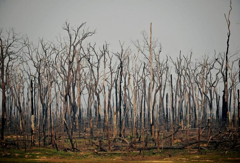 The number of forest fires in the Brazilian Amazon in July 2020 rose 28 percent from the same month a year ago, satellite data show
