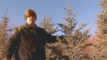 How to find and cut down your own perfect Christmas tree