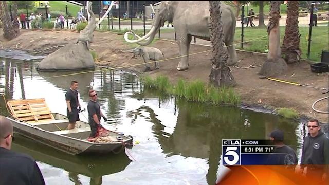 Divers Search La Brea Tar Pits For Evidence in Murder