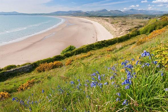 "<p>Want to see Wales' wild flowers and wonderful coastline? The <a href=""http://www.walescoastpath.gov.uk/default.aspx?lang=en"" target=""_blank"">Wales Coast Path</a> is excellent for a walk during summer, when you can see the bright hues of wild flowers along the cliff tops on the spectacular coastal trail. Look out for Welsh poppies, betony, toadflax and red and white campions. <strong>Best for: Garden lovers who appreciate a good view.</strong></p>"