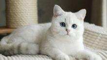 Coronavirus, la gatta sopravvissuta per 40 giorni a casa da sola
