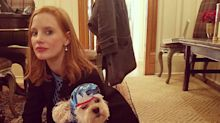 Stars Dress Up Their Dogs for Halloween — and It's Adorable!