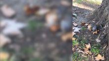 Auf frischer Tat ertappt: Eichhörnchen gönnt sich ein Stück Pizza
