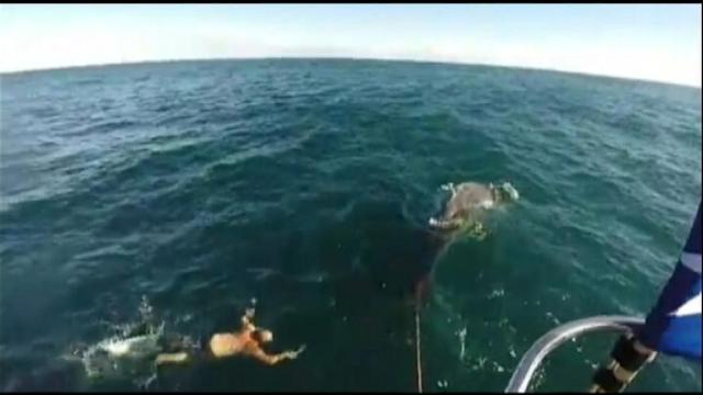 Fisherman Saves Baby Whale Tangled In Rope