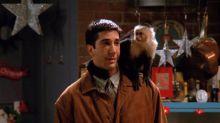 «Friends»: Marcel, le singe capucin de Ross, est de retour sur le petit écran