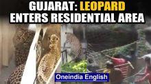 Leopard enters residential area in Gujarat's Dahod, creates panic: watch