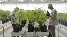 Dow Jones Leads Rally, As This Top Marijuana Stock Swings On Earnings
