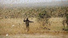 East Africa locust swarms gather as coronavirus curbs delay pesticides