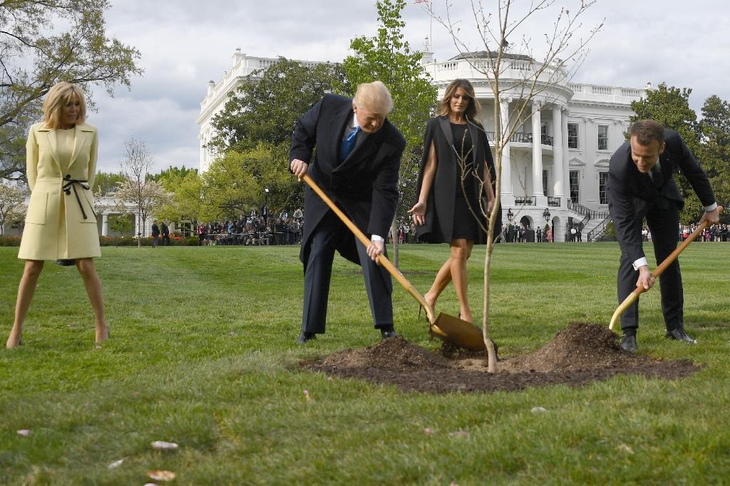 French president Emmanuel Macron will send a replacement oak tree to US president Donald Trump after the original died after being dug up from the White House garden