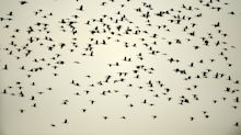 Las especies marinas migran hacia los polos más rápido que las terrestres