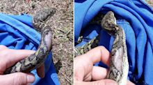 Why you should never try to catch a snake yourself