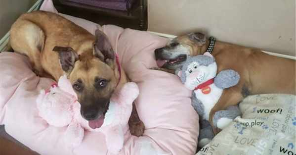 Woman Asks Shelter For Most Overlooked Dog