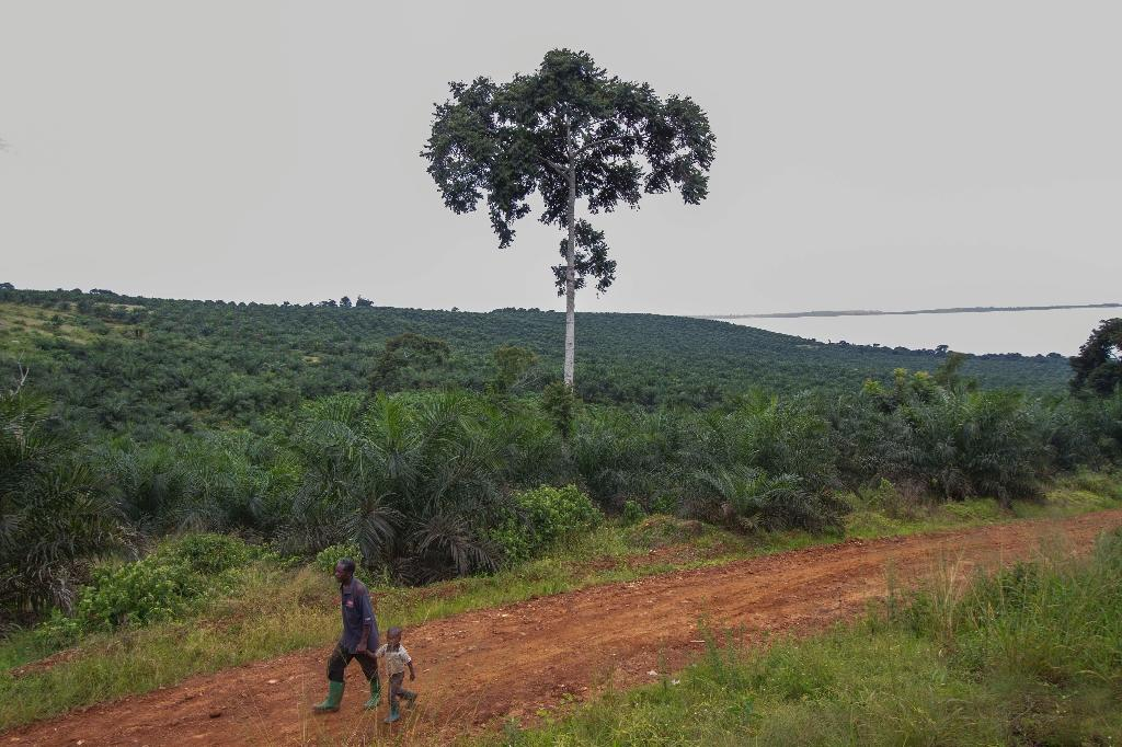 Outrage has grown worldwide over the plight of villagers and indigenous people being thrown off land sold to logging and mining companies, as well as agribusiness (AFP Photo/Isaac Kasamani)