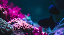Reef Finance Raises $3.9M for Cross-Chain DeFi on Polkadot