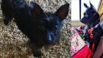 Reward offered in theft of dog from Rittenhouse Square apartment