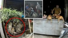 Dangerous coronavirus myth leads to unexpected dog meat demand