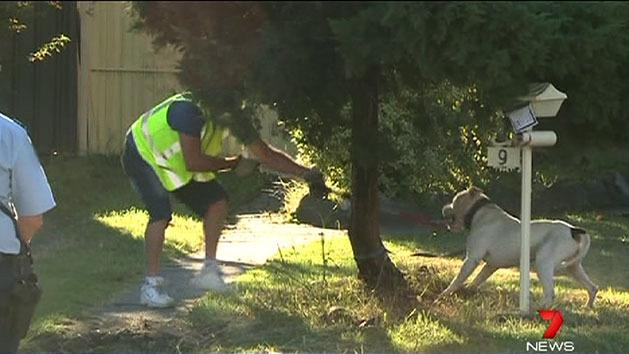 Police want vicious dogs put down