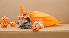 Life's a bitch without a good doggie Howl-o-ween costume: Here, 10 irresistible (and insta-worthy) options —?all $20 or less!
