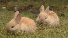 Don't feed the bunnies: City says it's the humans that need to be managed