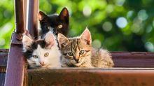 Das sind die beliebtesten Katzennamen