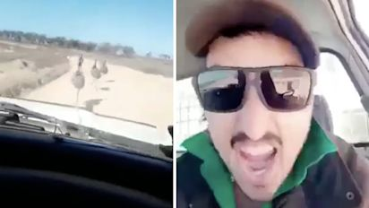 Video shows man laughing as he mows down emus
