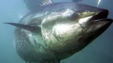 WTO lets Mexico sanction US in tuna stoush