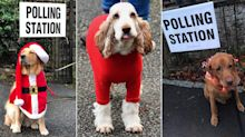 Dogs at polling stations: Election day pooches return for 2019 (with festive twist)
