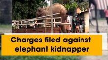Charges filed against elephant kidnapper