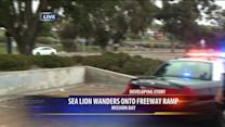 Sea lion wanders onto San Diego freeway ramp