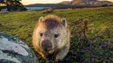 Call of the wild: eight extraordinary nature encounters across Australia