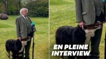 Le chien du président irlandais ne voulait pas le laisser finir son interview