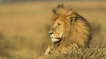 Married trophy hunters who kissed over dead lion face social media hate: 'Beyond disgusting'