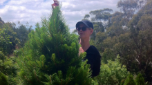 Why visiting this Aussie Christmas tree farm comes with a warning
