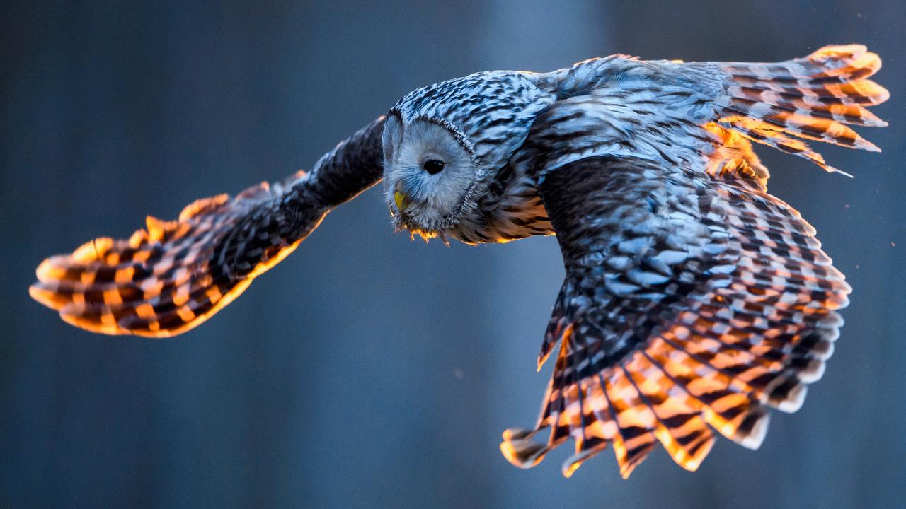 Birds' genetic secrets revealed in global DNA study